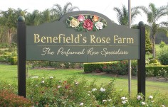 Benefields Rose Farm Business Sign