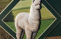Bellawood Alpaca Farm Sign Detail
