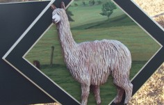 Bellawood Alpaca Stud Sign Detail