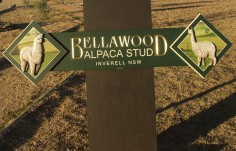 Bellawood Alpaca Stud Farm Sign