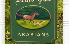 Druid Oak Horse Sign