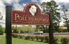 Poll Hereford Sign